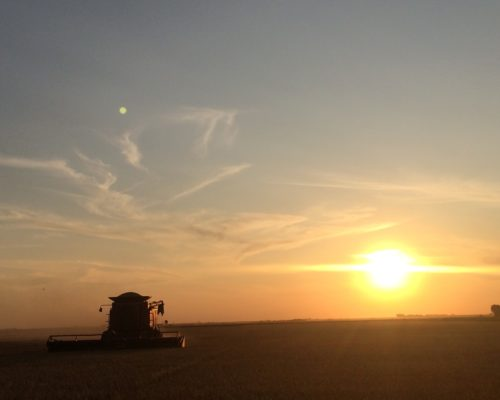 Combining in the setting sun.